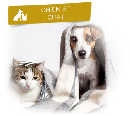 chat et chien bien protégés sous une couverture